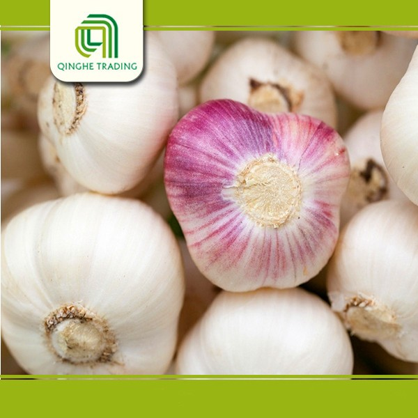 fresh garlic with low price