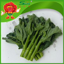 Top Quality Fresh Kale, Chinese Cabbage