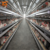 China Wholesale Poultry Broiler Chicken Cage for Poultry Farm Equipment