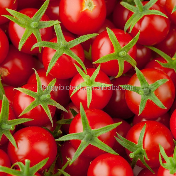 High Yield Tomato Seed Oil