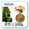 Best sale and hot promotion supply prickly pear cactus for weight loss in CN LAB