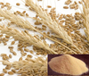Best Function Lose Weight Dried Barley