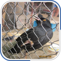 Bird Netting,Bird cage trap,Zoo animal mesh SS 304 316 316L China Factory