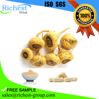 GMP Certified maca root extract powder