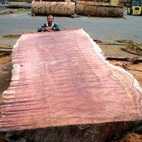 Iroko,Mahogany,Padauk,Sapelli,Doussie,Pachyloba,Wenge,Bubinga,Acajou,Tali,Teak Logs,Sawn Lumber And Decking Material