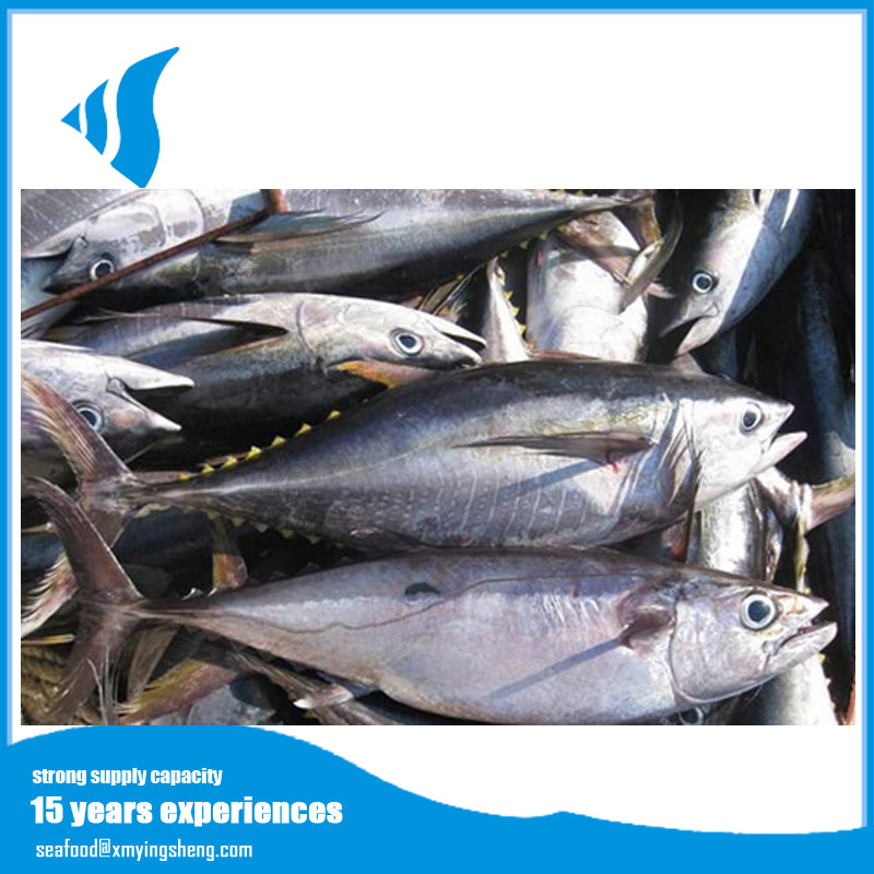 Frozen yellowfin tuna with competitive price
