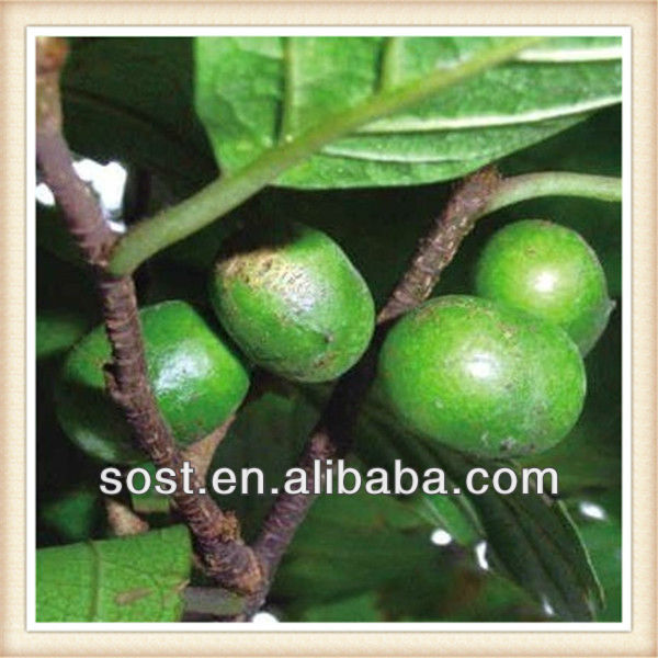 chinese fruit extract Pygeum africanum Extract