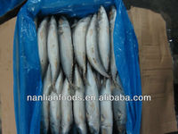 delicious mackerel fish for sale 300-500g
