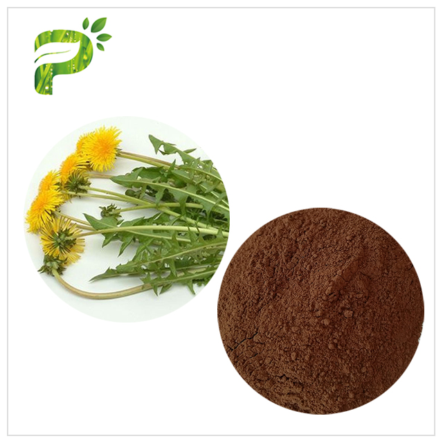 Hot sale Anti-bacterial Flavones 5% Dandelion Root Extract