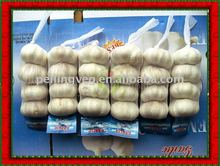shandong fresh new crop garlic