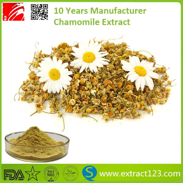 High Quality Chamomile Extract 1.2% Apigenin