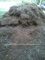 Dry cow dung manure