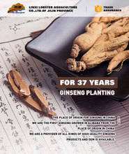 Chinese herbal ginseng containing rich saponins ,tiechi ginseng