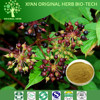 100% Pure Natural Angelica sinensis Extract / Dong Quai Extract