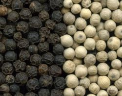 Black Pepper Lasta And FAQ Qualities