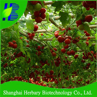 Hybrid vegetable seeds tree tomato seeds for sale
