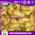Chinese Organic Fresh Ginger Root Supplier
