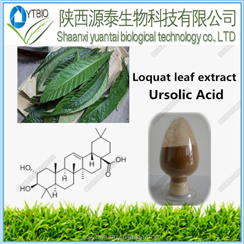 Supply Loquat Leaf extract, Ursolic Acid powder 5%-98% HPLC