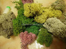 reindeer moss used to floral arrangements, planted bowls & wire rings.