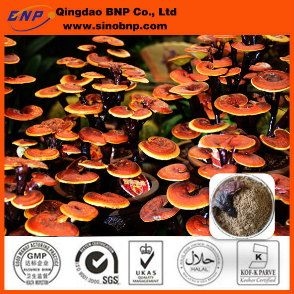 GMP Natural Ganoderma Lucidum Extract Reishi Mushroom Extract Multiple 10%-50% Polysaccharides