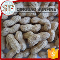 Import export peanuts in shell buyers