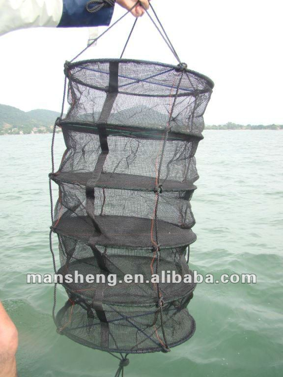 Lantern net farming for peruvian scallop