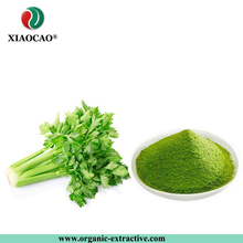 Water Soluble Organic Celery leaf extract powder/Celery Juice Concentrate Powder