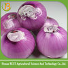 /product-detail/fresh-onion-red-onion-chinese-onion-price-60581731968.html