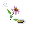 High Quality and Competitive Price Echinacea Extract