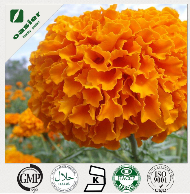 100% Natural Extraction Of Marigold Oleoresin Tagetes erecta L.