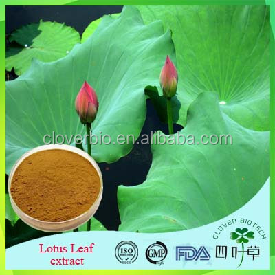 High Quality / 100% Natural Herbal / 2016 New Arrival Lotus Leaf Extract 2% Nuciferine With Competitive Price