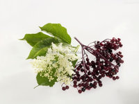 100% natural plant extract elderberry extract 15% 25%