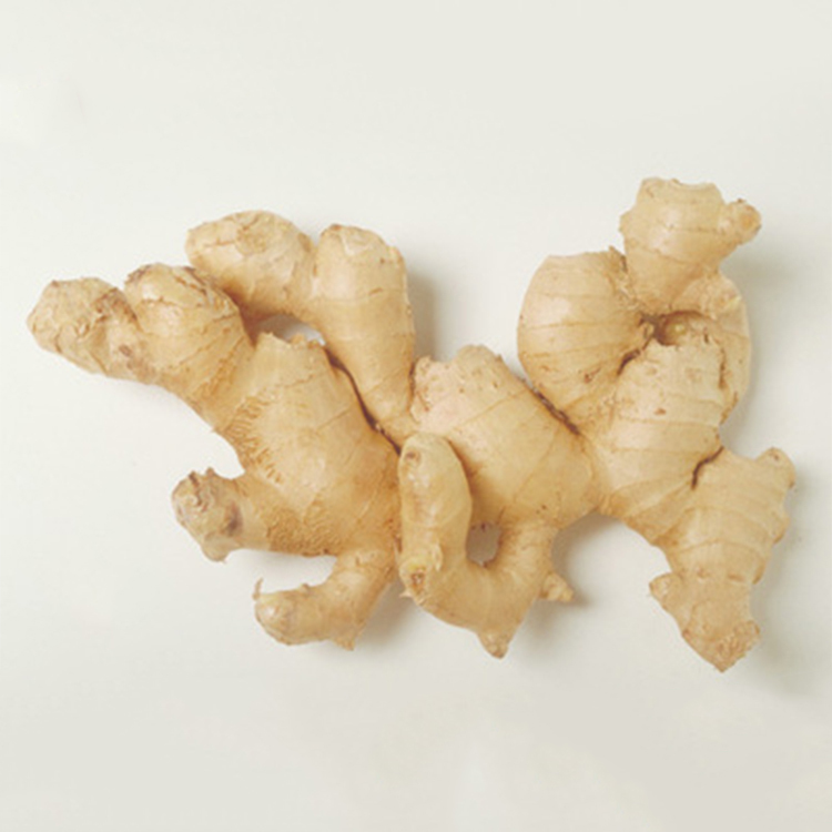 Wholesale China Market Price Super Ginger