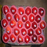 Huaniu apple/red delicious apple for supplier