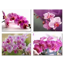 Household Decorative Butterfly Orchid Picture Giclee Print Pink Flowers Canvas Printed Picture Wholesale Framed Artwork 4 Pieces