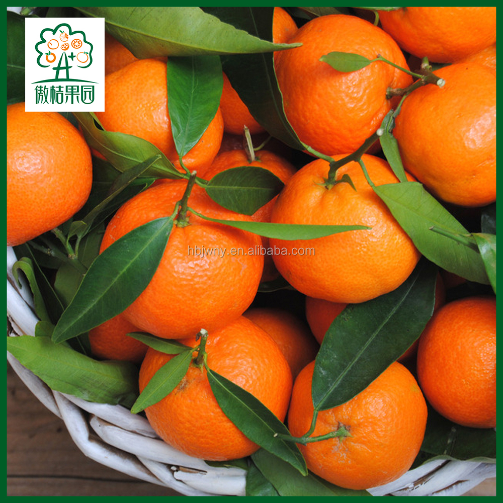 BULK FRESH MANDARINE FRUIT