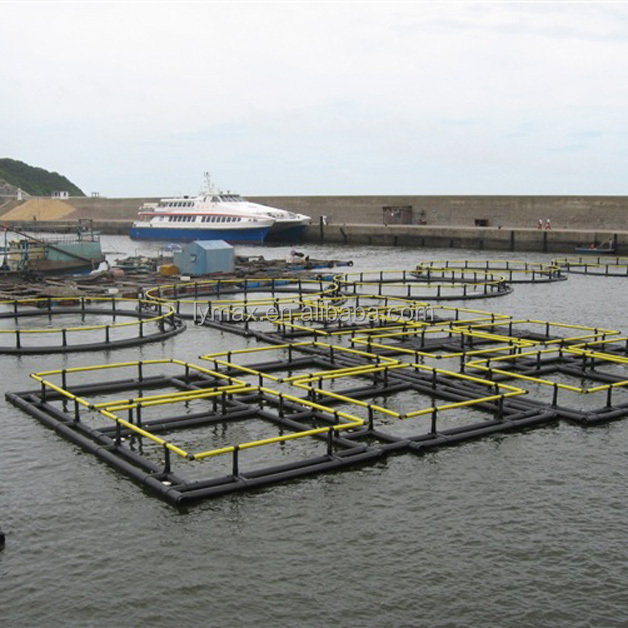 Square cages for tilapia fish farm in Lake Victoria