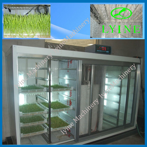 corn Alfalfa wheat Barley seeds sprouts germinator with Best Price