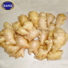 /product-detail/competitive-price-fresh-fat-ginger-with-super-quality-60573751491.html