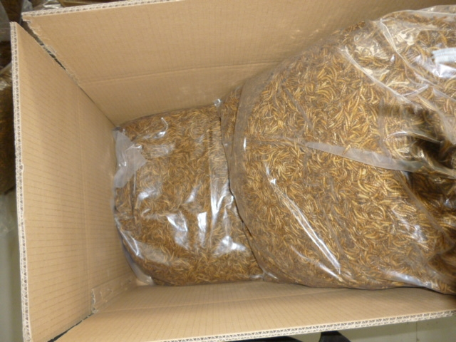 Pet Food ,Microwave Dried Mealworms