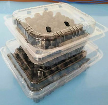 PET clear clamshell plastic blueberry packaging container