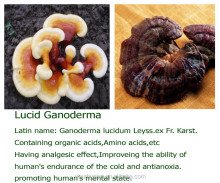 Increase immunity granule Ganoderma -Cordyceps granule boost immunity tablets