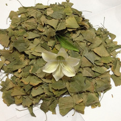 FDA approved factory supply Natural dried Gingko biloba leaf