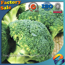 natural and fresh frozen broccoli