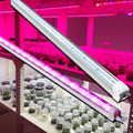VANQ plant tissue culture led supplies red blue white grow light for indoor seed tray