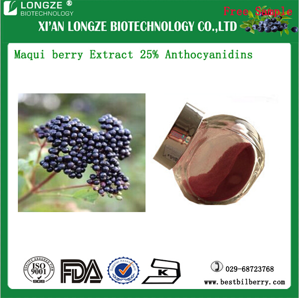 Maqui berry ExtractSpray-dried Maqui berry Powder Maqui berry P.E with Anthocyanidins 25% Polyphenols 10-20%