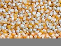 Dry Yellow Maize