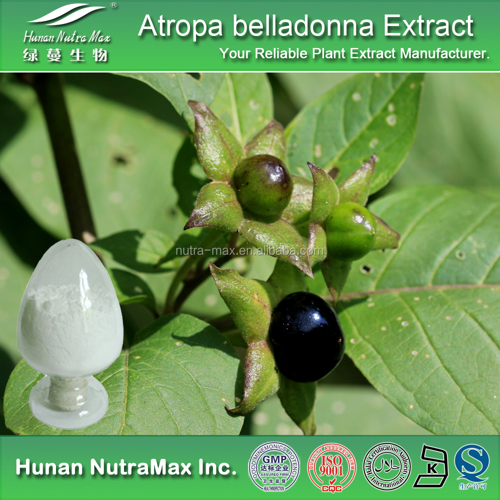 Belladonna Herb Extract, Belladonna Scopolamine 99%