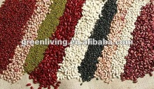 supply all kinds dry bean good quality and price