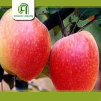 fresh qinguan apples/ unbagged qinguan apple fresh fruit